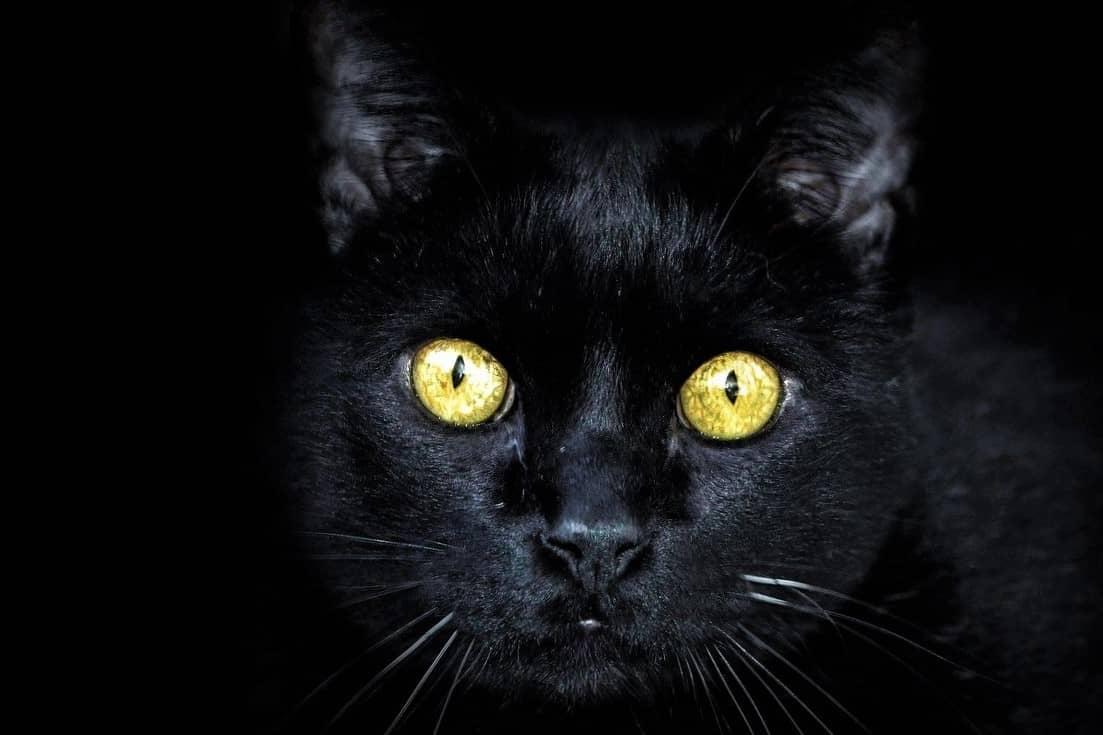 Melanofobia: fobia al color negro